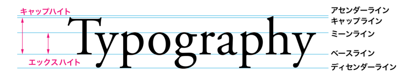 欧文書体の字面構成